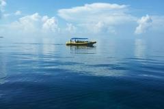 Pisces - Captain Kirks Fleet