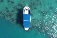 Reef Comber Kirks Adventures